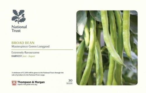 Thompson /& Morgan National Trust Broad Bean capolavoro VERDE longpod 30 Semi