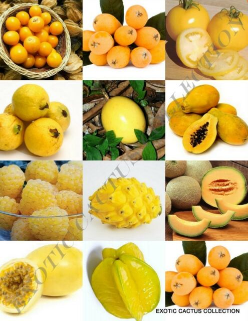 Yellow Fruits Mix Rare Organic Edible Colorful Fruit Healthy Food Seed 15 Seeds