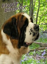 Saint Bernard Dog Design A6 Textured Birthday Card BDSAINTBERNARD-3 paws2print
