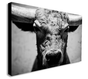 Image Is Loading Bulls Head Cow Black And White Canvas Wall
