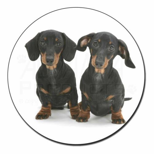 AD-DU2FM Two Cute Dachshund Dogs Fridge Magnet Stocking Filler Christmas Gift