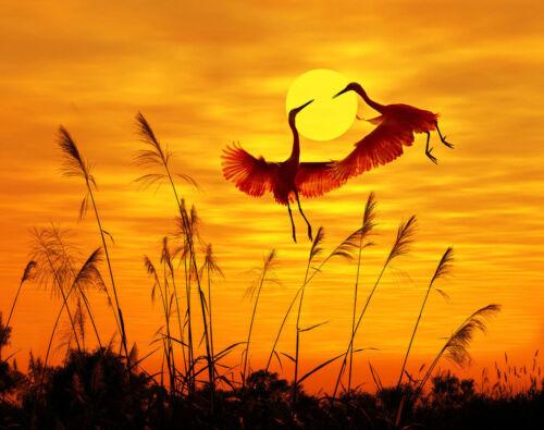 Best Gift Landscape Art Sunrise Birds Oil Painting Printed Canvas Home Deco Np55