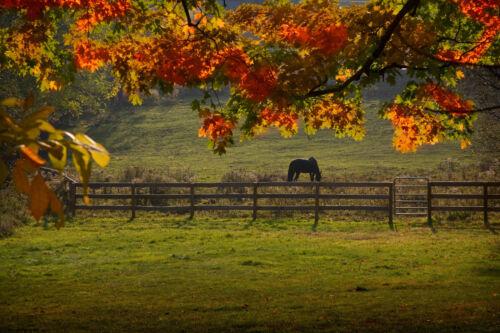 877 V Paysage Nature Jardin Nature Forêt Nappes Papier Peint-cheval dans la plaine