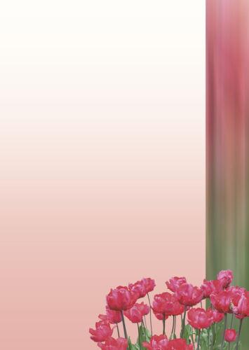 Motivpapier Briefpapier Tulpen rot grün  20 Blatt A4 Blumen Frühling Tulpe Blüte