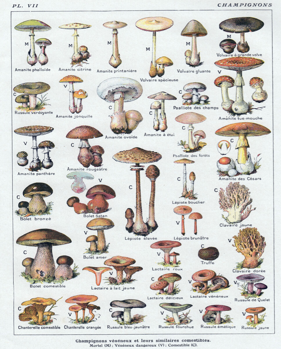 16x20  CANVAS Decor.Room design art print..Mushroom illustration in french.6133