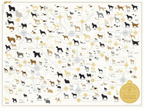 Dog Breeds Poster Art Collection Fabric POSTER Wall Decoration 0168