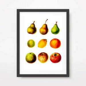 Fruit Art Print Traditional Style Kitchen Red Green Yellow Wall Decor A4 A3 A2 Ebay