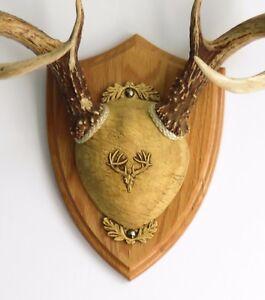 Medium Oak Ultimate Antler Mounting Kit for Deer - The ...