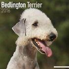 Bedlington Terrier Calendar 2016 by Avonside Publishing Ltd.