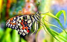 window guess room wall art beautiful butterfly art poster