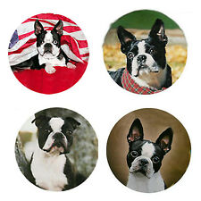Boston Terrier Magnets:   4 Bodacious Bostons for your Collection-A Great Gift