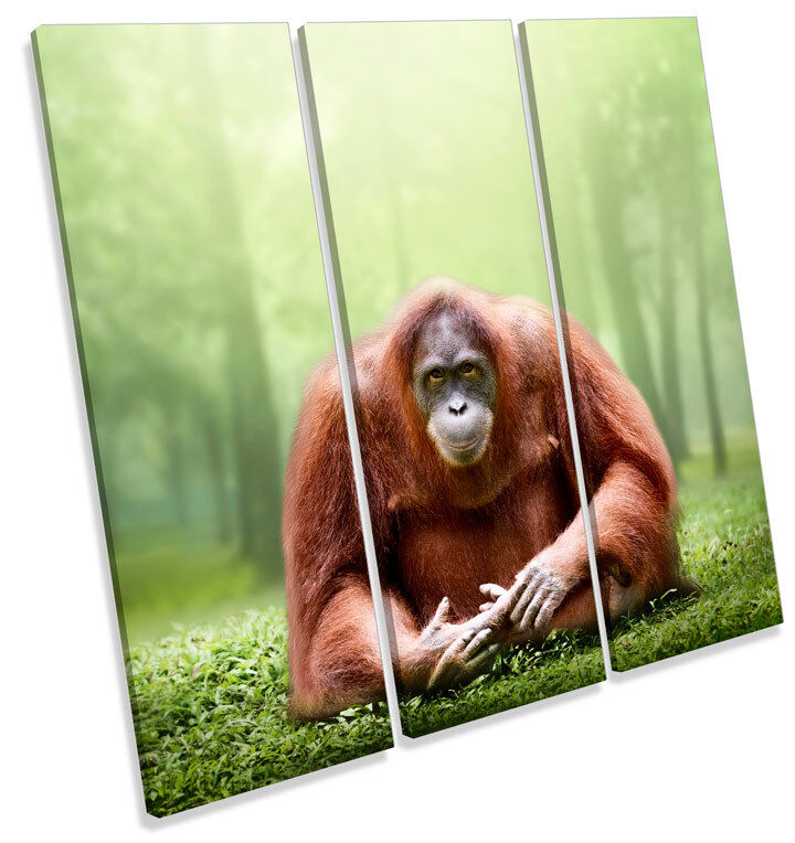 Orangutan Monkey CANVAS WALL ART Square Print Treble Picture