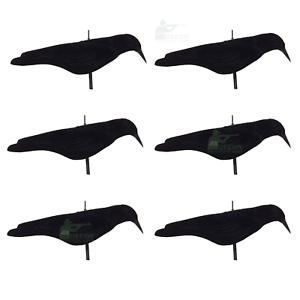 Flocked Crow Shells x 6 Decoy Multi Position Shooting Pecking Moving Stick Peg