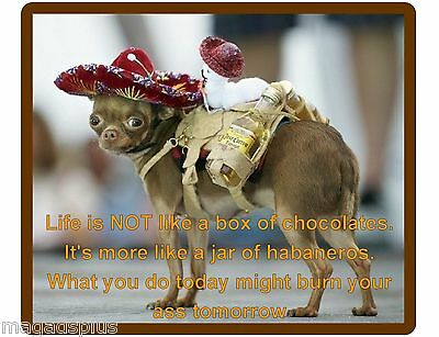 Funny Chihuahua Habaneros Dog Life Is Not Refrigerator / Tool Box  Magnet