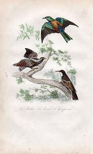 Amical Buffon / Les Oiseaux. Le Rollière - Le Corcol - Le Grimpereau Finement Traité