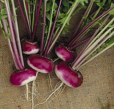 Turnip Purple top Milan - Min 500 seeds  vegetable