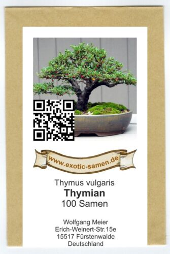 BONSAI-timo-thymus vulgaris 100 semi