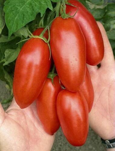 Tomato Seeds Miracle Banana red tomatoes organic Ukraine 20 seeds D Farmer idea