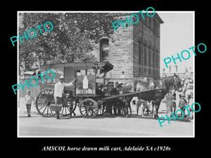 OLD-HISTORIC-PHOTO-OF-ADELAIDE-SA-AMSCOL-MILK-amp-DAIRY-Co-HORSE-CART-c1920s