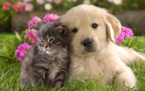 """Poster 24/"""" x 16/"""" Puppy Kitten Grass Flowers Couple Friendship"""