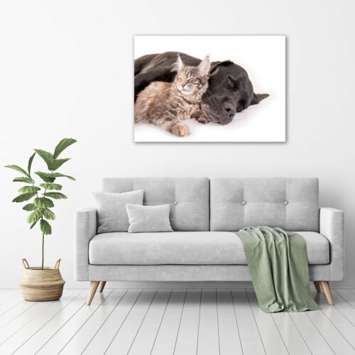Acrylglas-Bild Wandbilder Druck 100x70 Deko Tiere Hund Katze