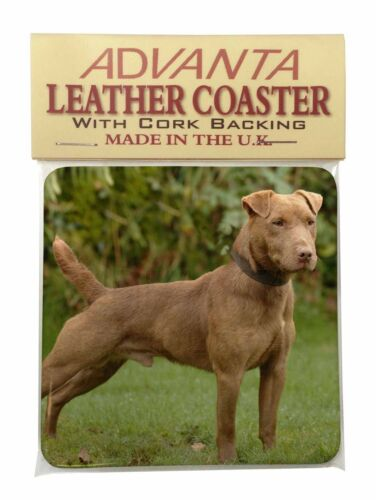 AD-PDT1SC Patterdale Terrier Dog Single Leather Photo Coaster Animal Breed Gift