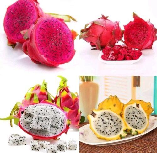 20 seeds Dragon fruit pitaya seeds mix 4 kinds 5 yellow,5 red,5 white,5 purple