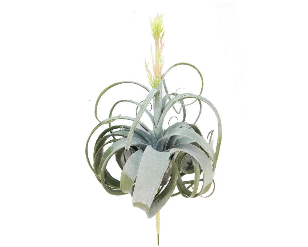 Pflanze air grass cm 55 55 55 künstlich dekoration zusammensetzung möbel 92158f