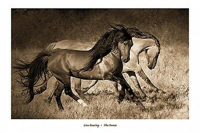 The Blonde by Lisa Dearing Western Horse Print 36x26