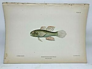 Original-Antique-Lithograph-Fishes-Puerto-Rico-Bien-1899-Plate-45