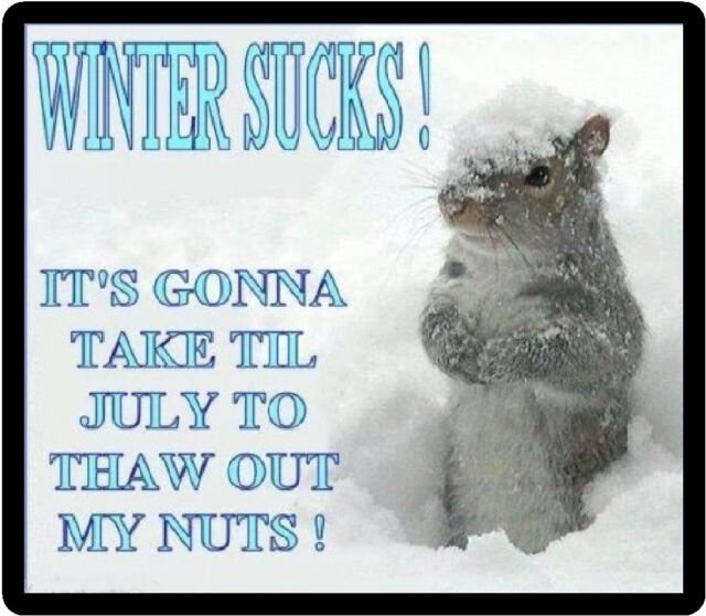 Funny Squirrel Humor Winter Sucks Refrigerator Magnet