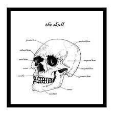 Skull Greetings Card Anatomy Science Osteology Anthropology Halloween Horror