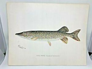 Original-Antique-Denton-Fish-Print-Pike