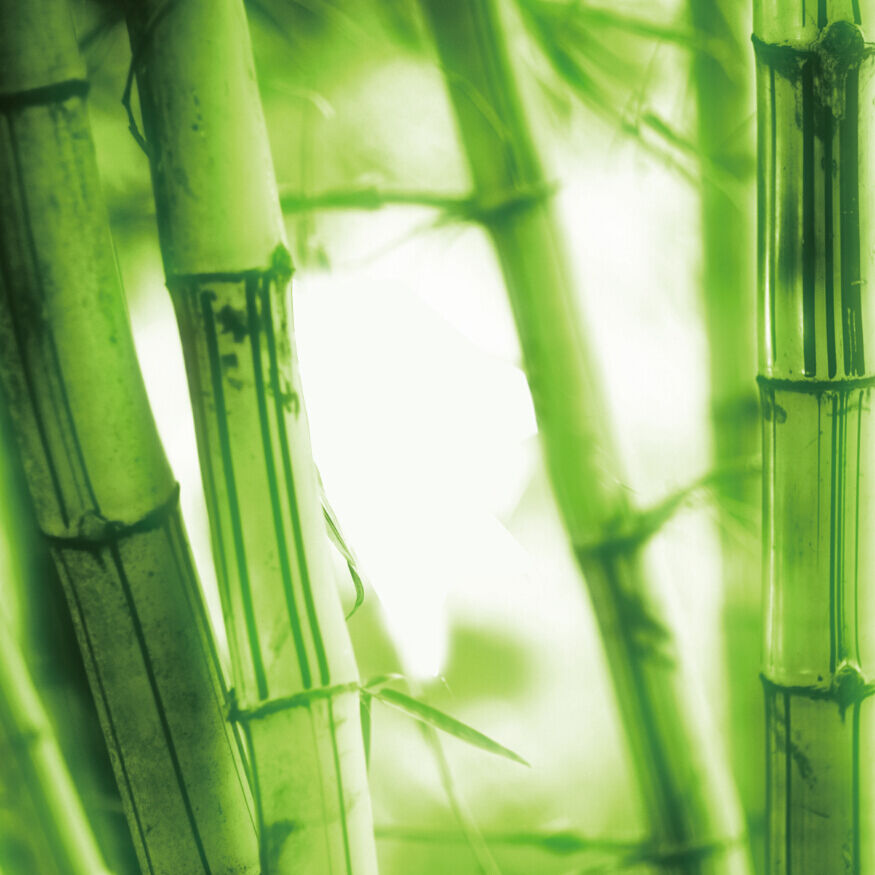 3D Bamboos Trunks 2377 Wall Paper Wall Print Decal Wall Deco Wall Indoor Murals