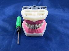 Model Anatomy Typodont Dental Type Frasaco Model FG3 ARTMED