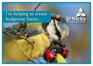 Charity-gift-card-create-hedgerow-feasts