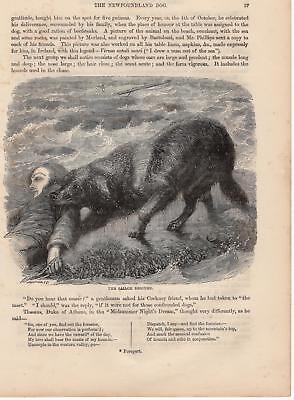 Ehrlichkeit Hund Rettet Seemann Rettungshund Holzstich Von 1866 Halten Sie Die Ganze Zeit Fit