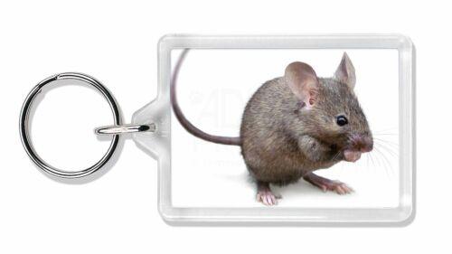 House Mouse Photo Keyring Animal Gift AMO-10K