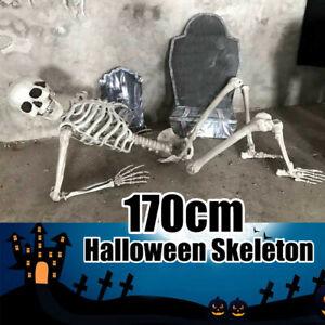 Life-Size-Human-Skeleton-Model-Halloween-Posable-Movable-Bones-Prop-Decor-170CM