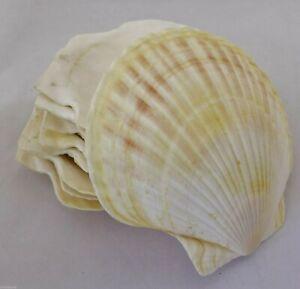 Clam-Shell-Bowl-Plate-Seaside-Decor-6-1-2-034-1940-039-s-Era