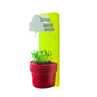 New Mini Cloud Rainy Plant Flower Pot Planter Nutritional Soil+Seed Decoration^