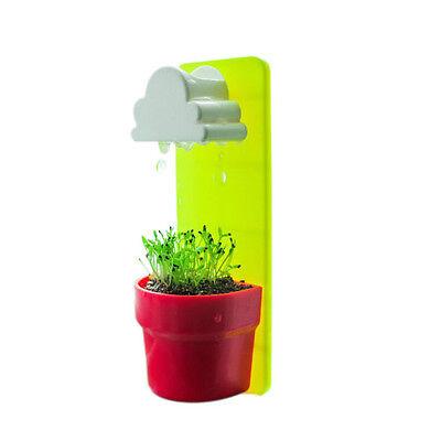 New Mini Cloud Rainy Plant Flower Pot Planter Nutritional Soil+Seed Decoration^