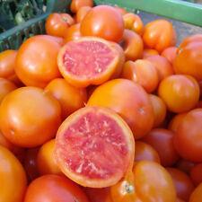 Vegetable - Tomato - Zlatava - 30 Seeds