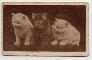 Rare-Original-UK-Trade-Card-Edmondson-Art-Picture-Series-3-cats-kittens