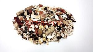 PREMIUM-2KG-LOW-SUNFLOWER-LARGE-PARROT-MACAW-CAGE-FOOD-MIX-SEED-J-amp-J-WEIGH-OUT