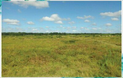 Remato Rancho de 150 Hectareas es Propiedad a 19 min de Campeche 2 pozos de agua Luz propia equipa