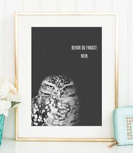 GRUMPY-OWL-NEIN-Kunstdruck-Poster-Bild-Wald-Eule-Kauz-genervt-Arbeitsplatz