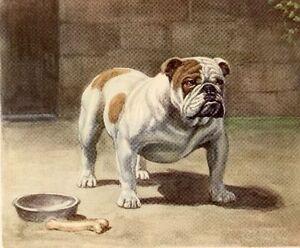 Vintage Dog Art Print English Bulldog Girl Poncelet