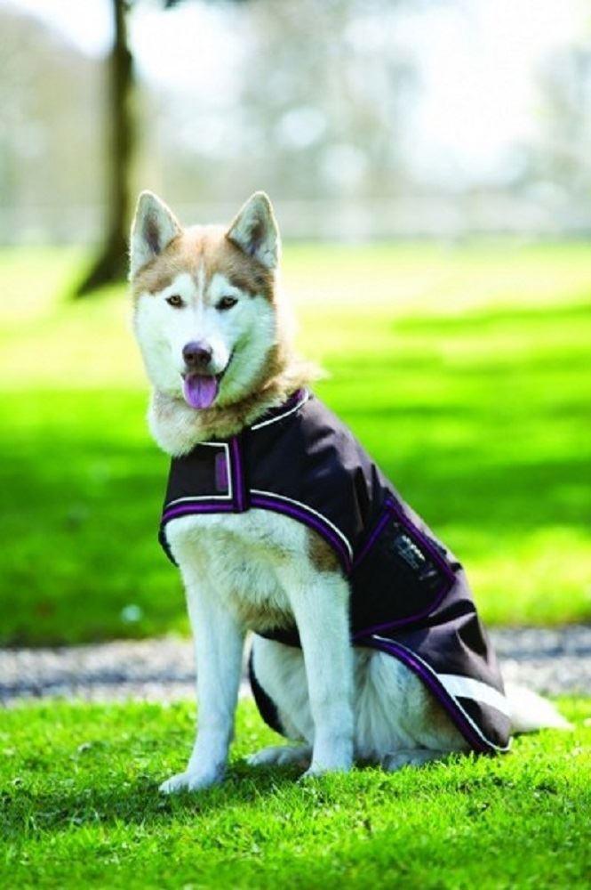Horseware Ireland Amigo Hund Rug 100g Rrr002   | Realistisch