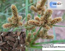Dr T&t Xiang Fu 100g hierba seca/Rhizoma cyperi/Tuerca hierba rizoma